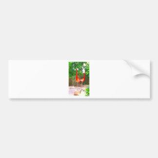 Flamants roses à Key West Autocollant De Voiture