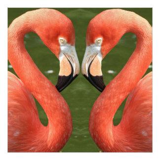 Flamingo_20170701_by_JAMFoto Impression Photo