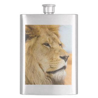 Flasque Grand lion regardant loin