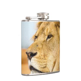 Flasques Grand lion regardant loin