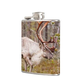 Flasques Renne marchant dans la forêt