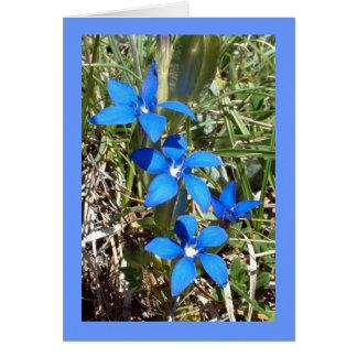 Fleur alpine de gentiane bleue -- Carte de voeux
