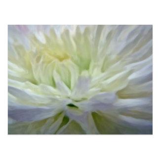 Fleur blanche carte postale