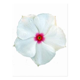 fleur blanche cartes postales