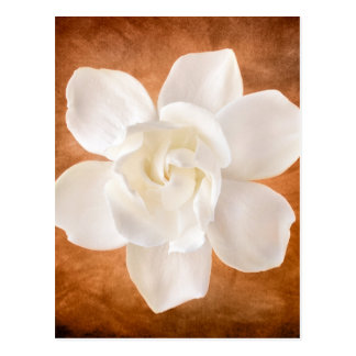 Fleur blanche de fleur de gardénia florale carte postale