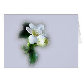 fleur blanche de freesia carte de vœux