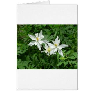 fleur blanche de montagne carte de vœux