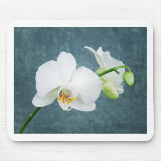 Fleur blanche d'orchidée de zen tapis de souris