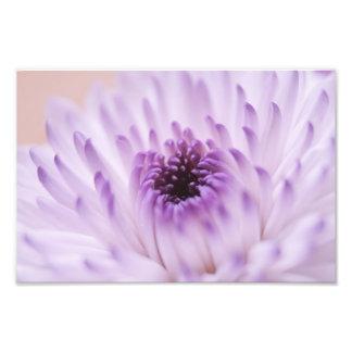 Fleur blanche et pourpre photographies d'art