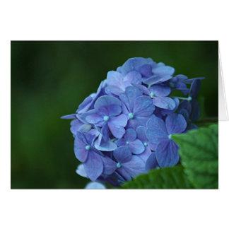 Fleur bleue d'hortensia carte de vœux