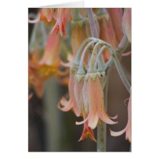 Fleur Cartes
