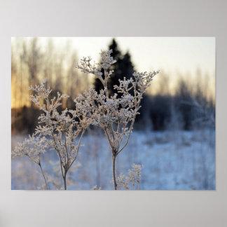 Fleur congelée posters