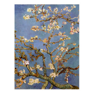 Fleur d'amande de Van Gogh Cartes Postales