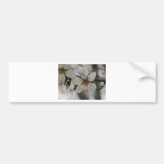 Fleur d'amande en sierra Espuna, Murcie, Espagne Autocollant De Voiture