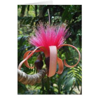Fleur d'arbre de Bombax Carte De Vœux