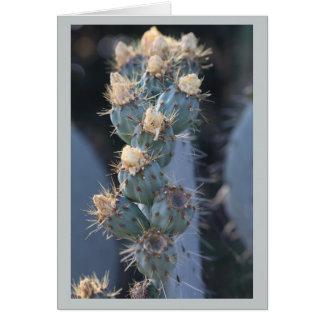 fleur de cactus cartes