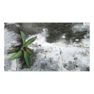 Fleur de carte de visite