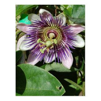 Fleur de carte postale de passion