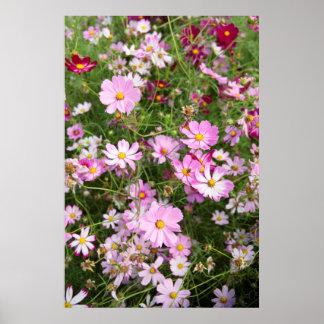 Fleur de cosmos (Bidens Formose). Kirkwood Poster