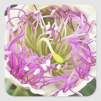 Fleur de fleur de câpre sticker carré