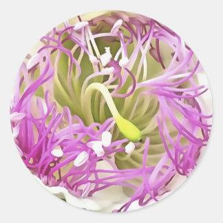Fleur de fleur de câpre sticker rond