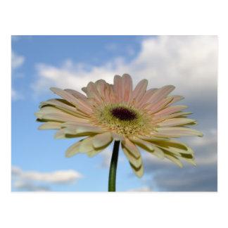 Fleur de Gerbera de juin dans le ciel Cartes Postales