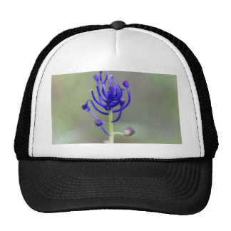 Fleur de jacinthe de gland (comosum de Muscari) Casquettes