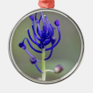 Fleur de jacinthe de gland (comosum de Muscari) Ornement Rond Argenté