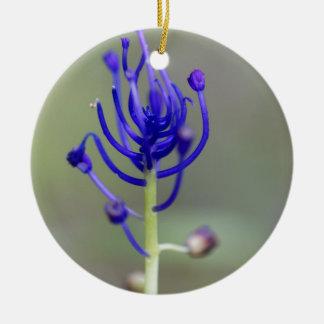 Fleur de jacinthe de gland (comosum de Muscari) Ornement Rond En Céramique