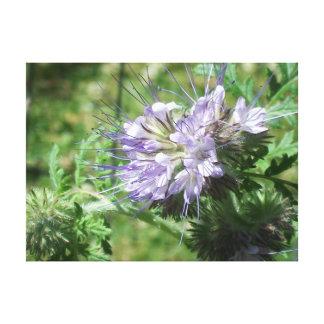 Fleur de l'ami de l'abeille toile