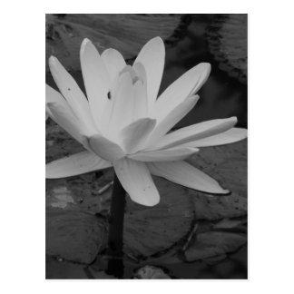 Fleur de Lotus B W