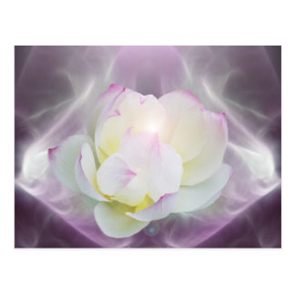 Fleur de lotus blanc carte postale