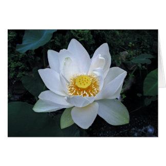 Fleur de Lotus Cartes De Vœux