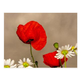 Fleur de pavot carte postale
