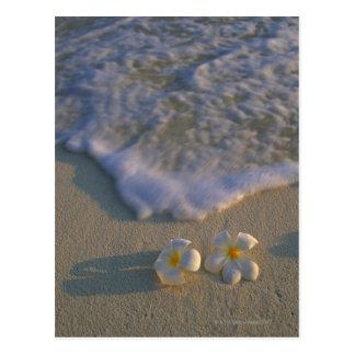 Fleur de plage cartes postales