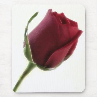 Fleur de rose rouge sur le blanc tapis de souris
