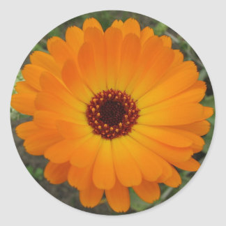 Fleur de souci du cadran du Husbandman orange Sticker Rond