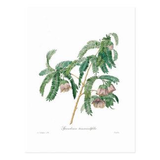 Fleur de tamarinier carte postale