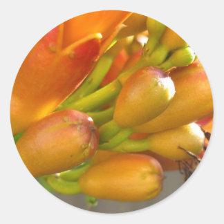 Fleur de trompette orange avec l'abeille autocollant rond