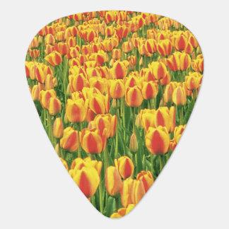 Fleur de tulipes de ressort devant la vieille médiators