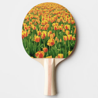 Fleur de tulipes de ressort devant la vieille raquette tennis de table