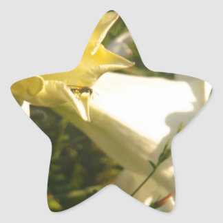 Fleur de vigne de trompette avec une guêpe sticker en étoile