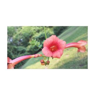 Fleur du Honduras Toile