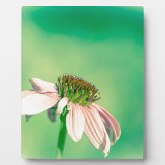 Fleur en pastel abstraite plaque photo