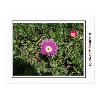 Fleur et abeille carte postale