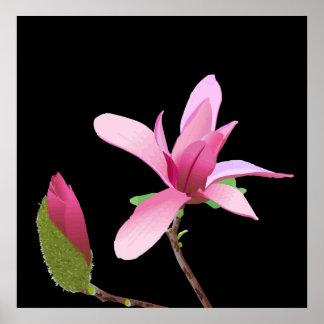 Fleur et bourgeon roses sensibles posters