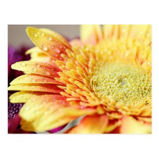Fleur et carte postale jaunes de gouttelettes