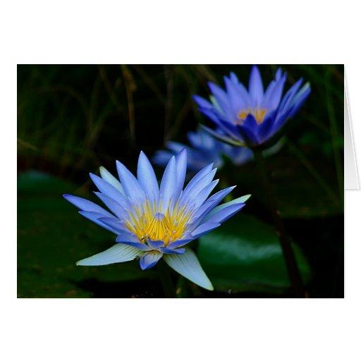fleur et signification de lotus carte de v ux zazzle. Black Bedroom Furniture Sets. Home Design Ideas