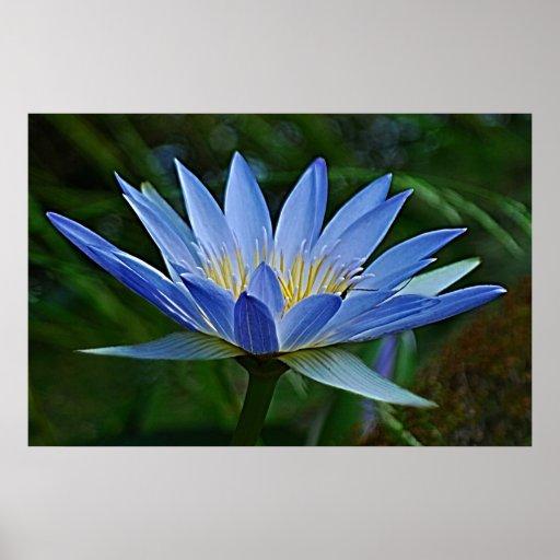 fleur et signification de lotus poster zazzle. Black Bedroom Furniture Sets. Home Design Ideas