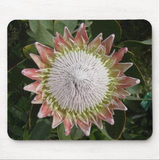 Fleur géante de Protea Tapis De Souris